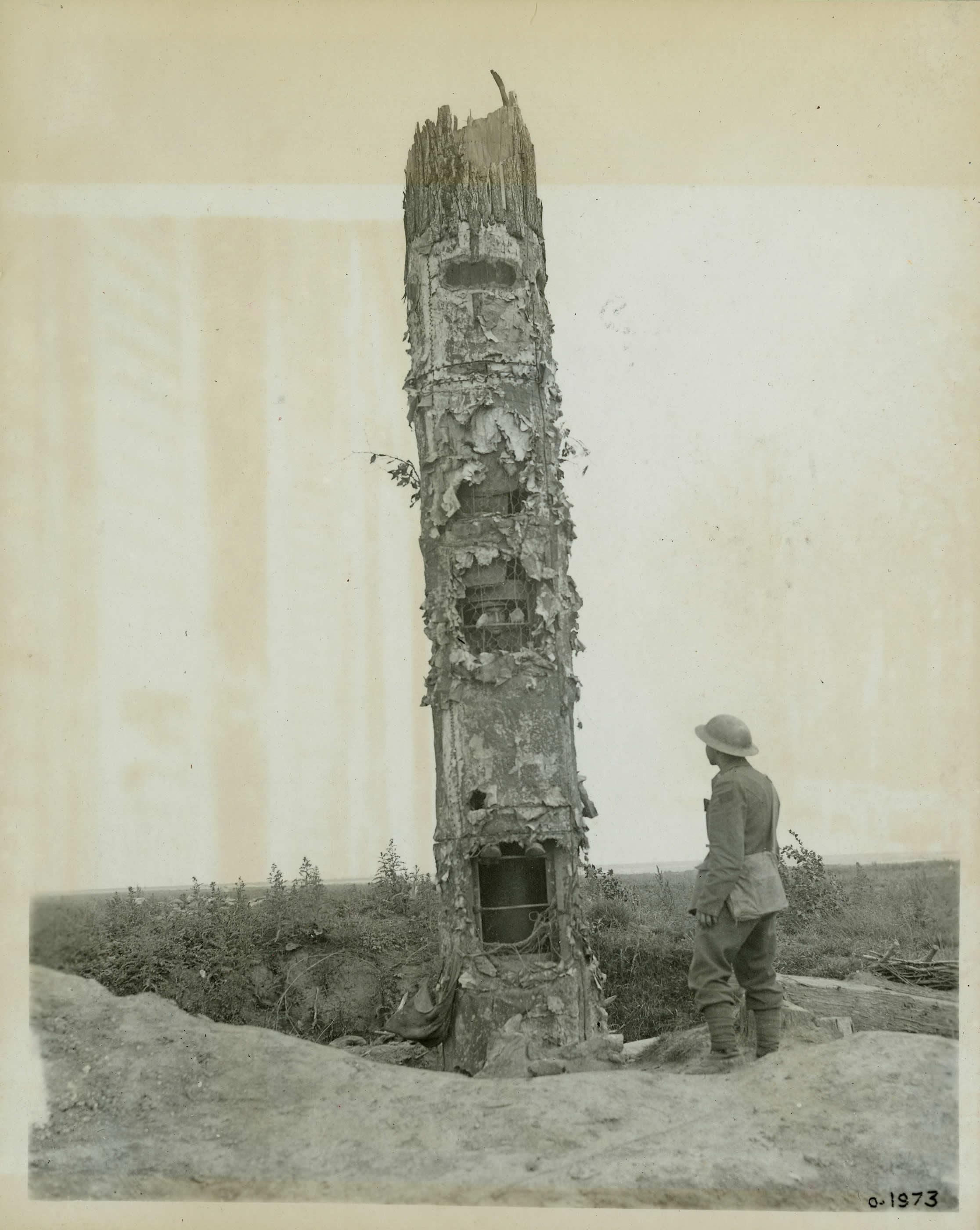 Poste d'observation dans un tronc d'arbre