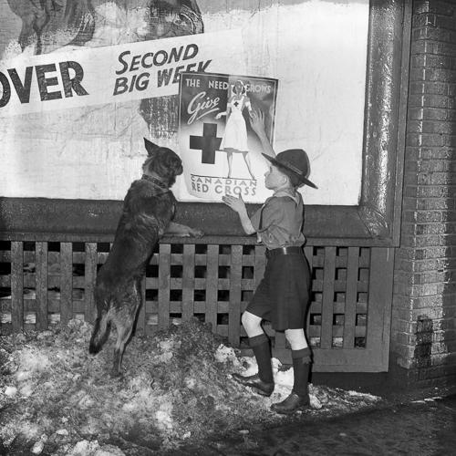 Un scout, accompagné de son chien, pose une affiche de propagande dehors.