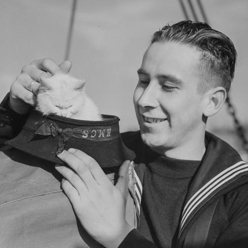 Un marin caresse la mascotte de son navire, un chat blanc, qui est assis dans sa casquette.